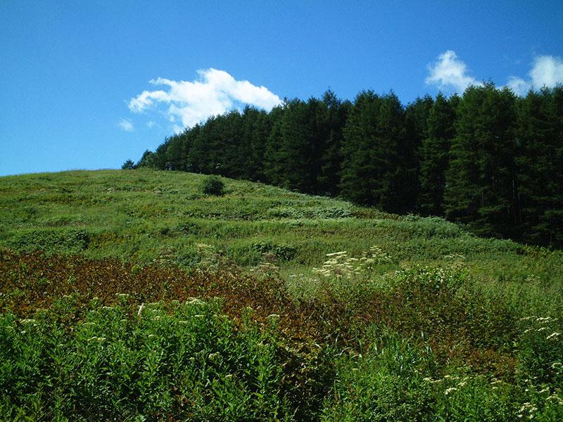 林の左側は段々状の丘