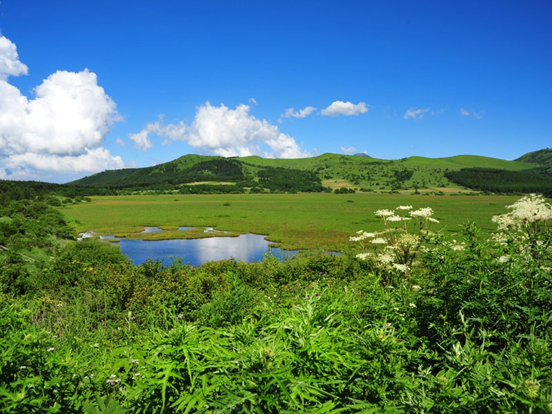 青々とした湿原と周囲の山。青空が池に映りこみ背の高い白い花が咲いている。