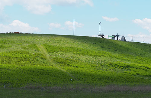 なだらかな忘れ路の丘に青々したオニゼンマイが盛り上がったように広がる