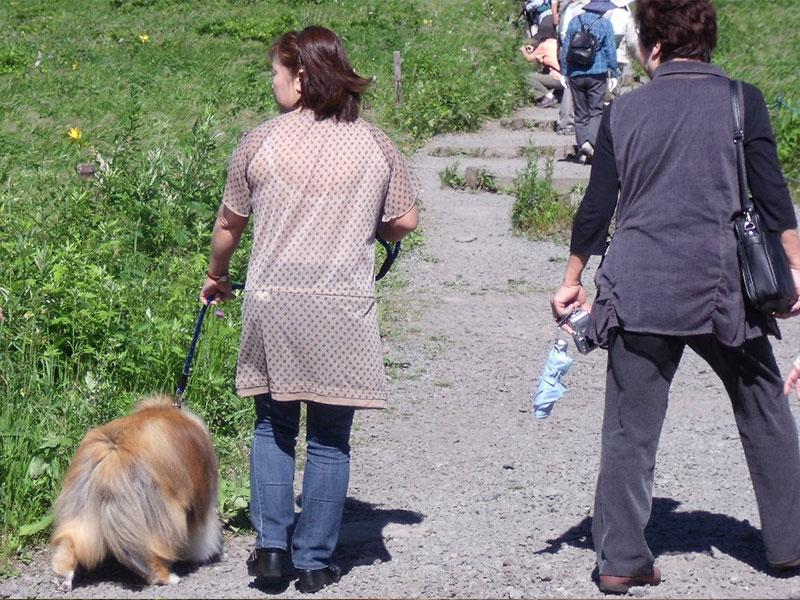 犬が繋がれた引き綱を短く持って歩く女性