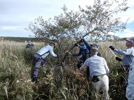 大人数で木を切る作業