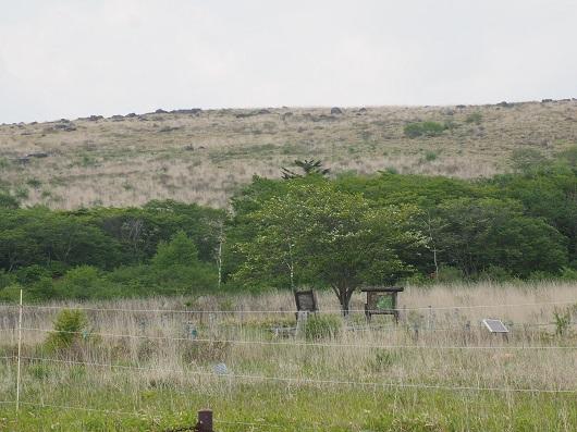 草原に生える木