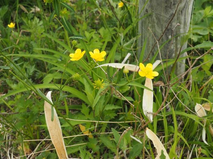 茎の先に黄色い花
