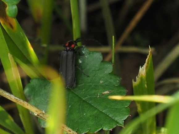 昆虫ひしめく霧ヶ峰の夏の画像
