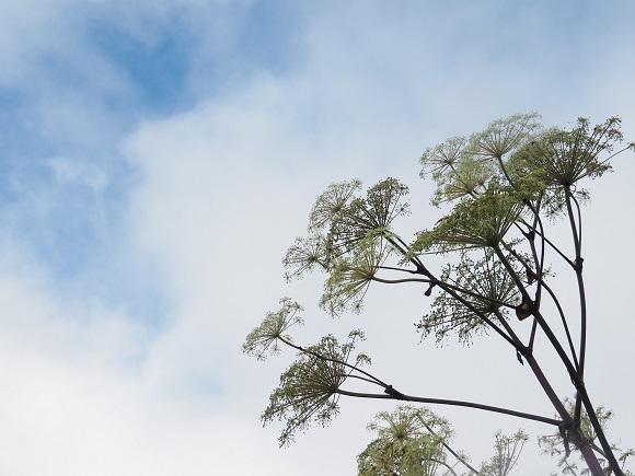 青空と植物