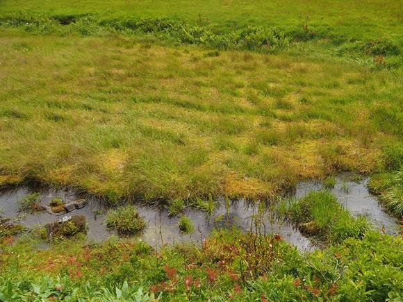湿原の様子