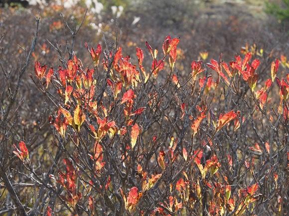 色んな秋。の画像