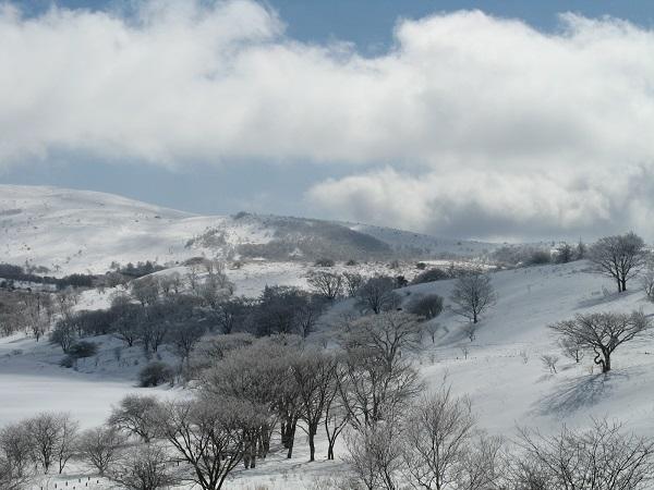 地表が雪で真っ白に覆われた景色